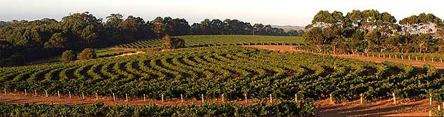 Photo of Leeuwin Estate winery vineyards Margaret River